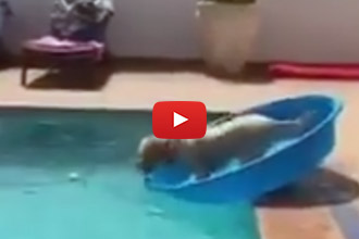 A Dog's Guide To Retrieving Things From The Pool Without Getting Wet