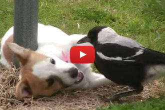 A Dog and a Bird Playing Together? OK, Now We've Really Seen it All...