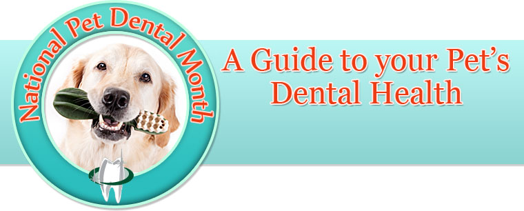 A Guide To Your Pets Dental Health