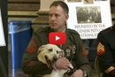 A Heartwarming Surprise Reunion Between a Marine and the Dog He Served With