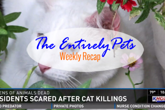 A Serial Cat Killer is Still at Large in Houston, The Ebola Dog is Found to be Virus-Free, and Veterinarians Save a Cat's Life by Getting it Drunk on Vodka-  This & More in the EntirelyPets Weekly Recap (October 18-24, 2014)