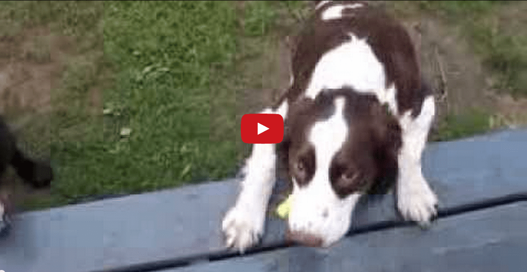 Absolutely Amazing! Watch This Blind Dog Play Fetch Like A Pro!