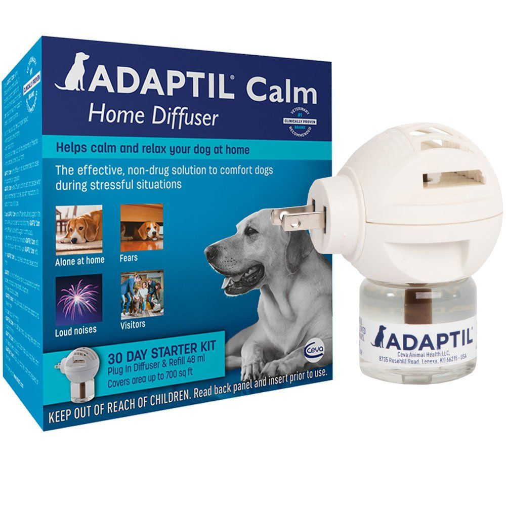Anxiety Meds for Dogs, Calming Aids & More | EntirelyPets