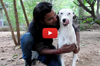 After Being Hit By A Car And Abandoned, This Dog Couldn't Even Walk