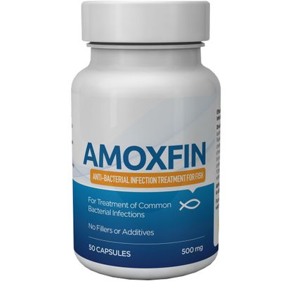 Amoxfin Fish Antibiotic (50 Capsules)