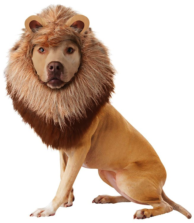 ANIMAL-PLANET-LION-DOG-COSTUME-X-SMALL