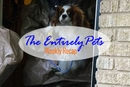 Another Dog Exposed to Ebola Awaits His Fate in 21-Day Quarantine, A Puppy Mill Closure Puts Local SPCA in Precarious Position, and an Experiment Confirms that Lizards are Smart-  This & More in the EntirelyPets Weekly Recap (October 11-17, 2014)