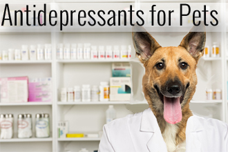 Antidepressants for Your Pet