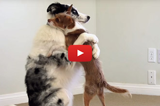 Anyone Else Need A Hug? These Three Dogs Have A Lot To Offer!