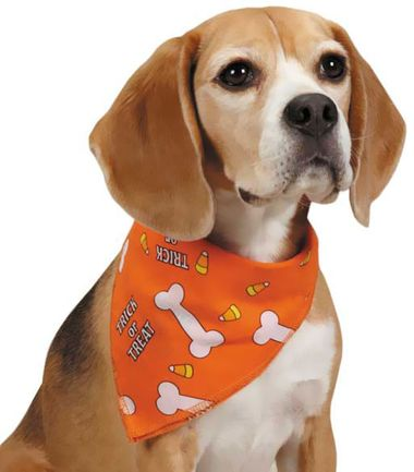 Finest Pet Halloween Costumes for Canine 6