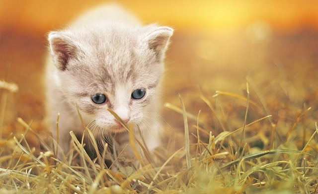 Best Dewormers for Cats (2019)