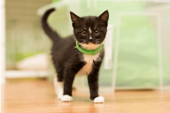 The Best Flea Collars for Cats - 2018 Reviews