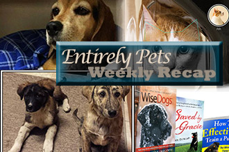 Big Reunions, Technological Advances, and More: Find Out What You Missed In the World of Pets with The EntirelyPets Weekly Recap (July 14-18, 2014)