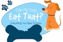 Can My Dog Eat That? A Safety Guide to Giving Human Food to Dogs