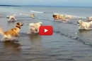 Can You Guess Which One Of These Dogs Had Never Seen The Ocean?