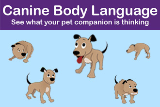 Canine Body Language [Infographic]