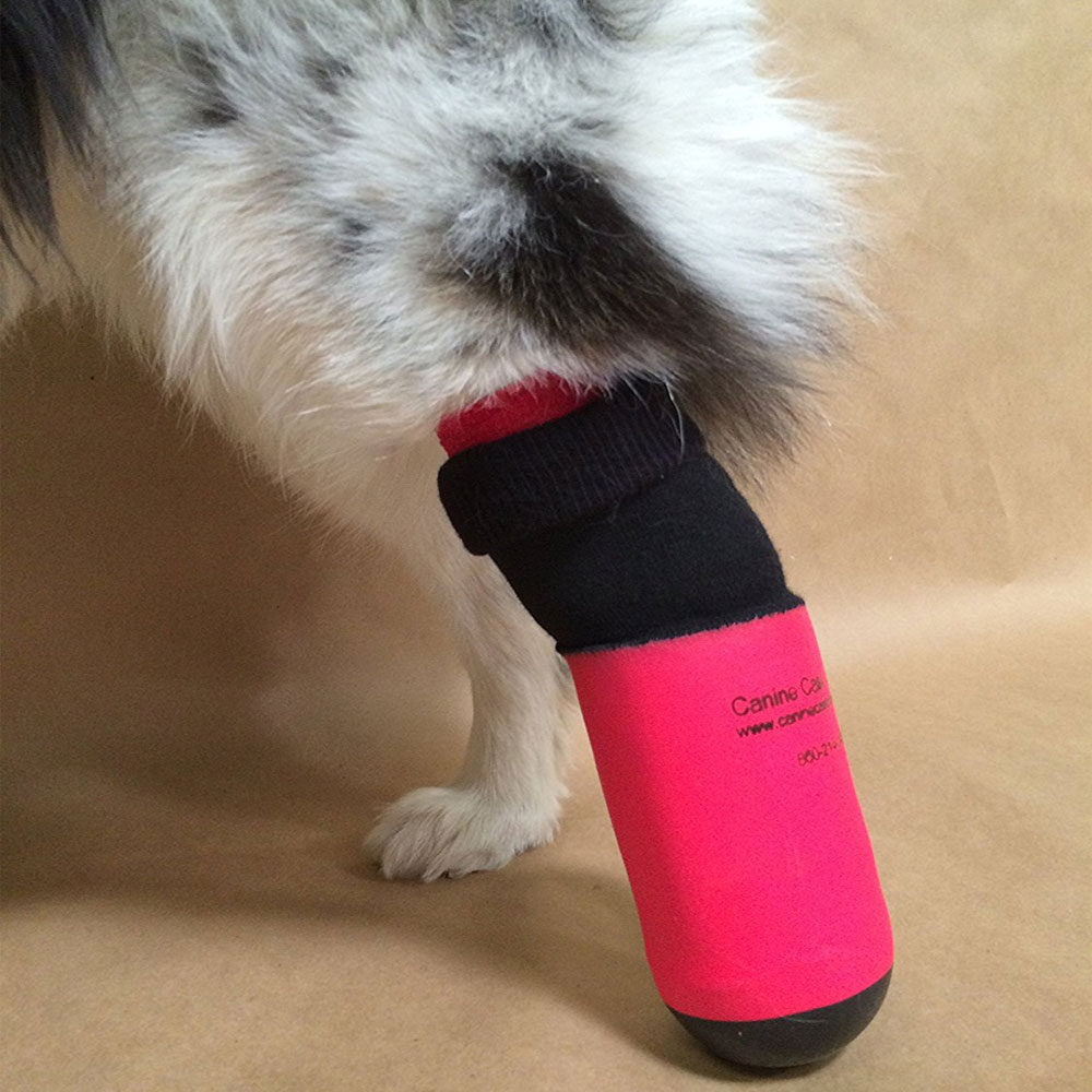 CANINE-CAST-COVERS-BLUE-SMALL