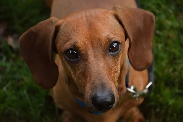 Canine Diet for Dogs with Kidney Disease