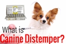 Canine Distemper: Treating and Preventing Distemper in Dogs
