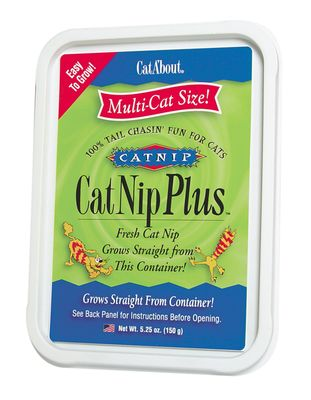 Cat A'bout CatNip Plus Tub - Multi-Cat Size - 150 grams - from EntirelyPets