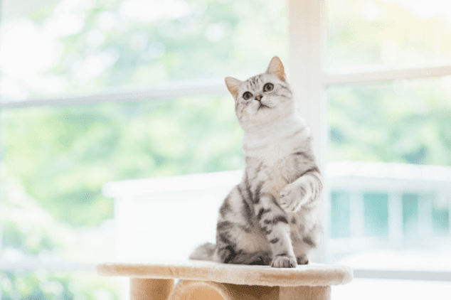 Cat Ear Mites: Causes, Symptoms, and How to Treat Them (2019 Update)