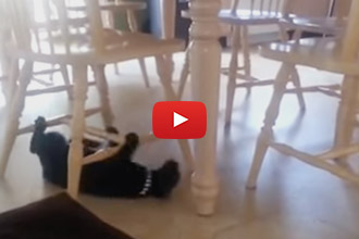 Cats Can Be Weird, And This Cat Is Out To Set The Weird Record!