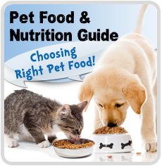Choosing The Right Cat Food For Your Cat