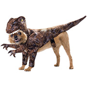 Clearance Sale - Halloween Costumes