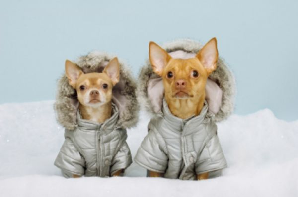 Cold Weather Activities For You And Your Dog