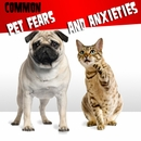 Common Pet Fears and Anxieties