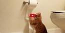 Cute Cat Creates Chaos with Toilet Paper Roll! Absolutely Hysterical!!