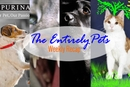 Deadly Dog Food, A Cat Allergy Cure, & America's Top Dog: The EntirelyPets Weekly Recap (February 21-27, 2015)