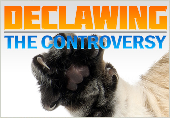 Declawing the Controversy