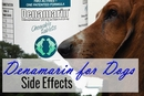 Denamarin for Dogs Side Effects