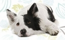 Does Your Pet Have Kidney Disease?