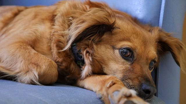 Dog and Cat Vomiting: When to Worry