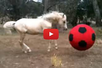 Dogs Aren't The Only Ones Who Love To Chase Balls!