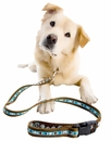 Dogs Collars & Leashes