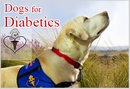 Dogs4Diabetics is Saving Lives with a New Breed of Assistance Dog