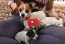 Dottie's Puppies Had A Slim Chance, Until Hope For Paws Saved The Day!