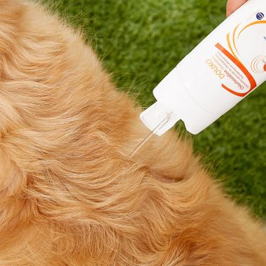 Close up of shampoo being squeezed onto dogs back
