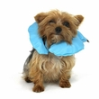 """VetOne Eliz Air-Tight Inflatable Collar, X-Small, Up to 6"""""""