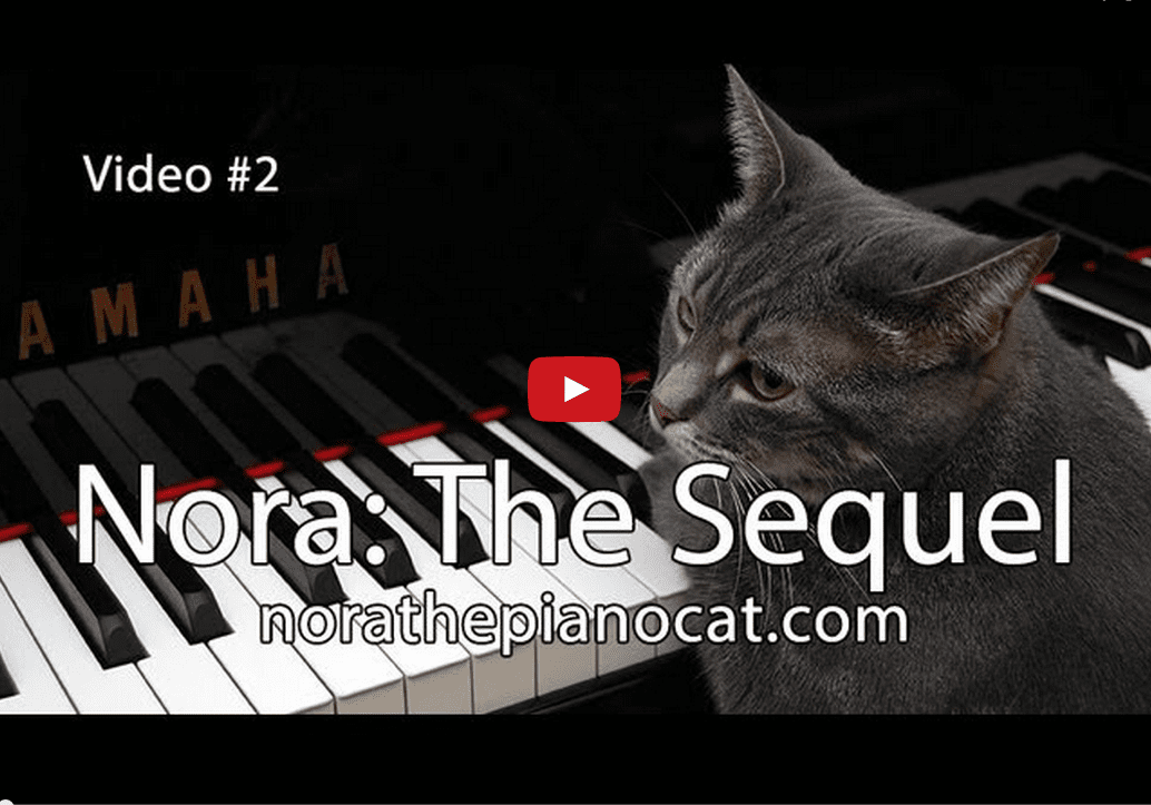 Enjoy the Musical Stylings of Nora the Feline Pianist!