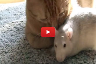 Ever Seen A Pet Pair Like This One? We Were Surprised!