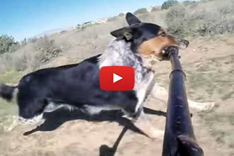 Ever Wonder What Happens When You Give A Dog A Selfie Stick?