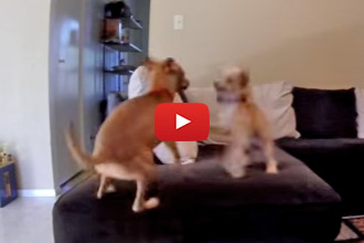 Ever Wonder What Your Dog Does When You Aren't Home?