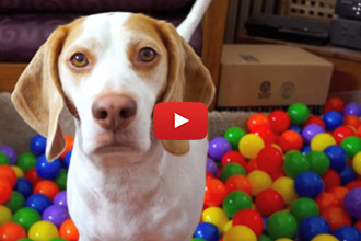 Every Wonder What To Get Your Dog On His Birthday?