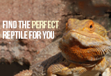 Finding the Perfect Reptile for You