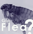 Flea & Tick Control Medicine for Dogs and Cats