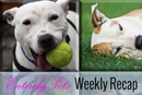 Freedom, Protection, Chaos, & More: See Why This Was a Big Week for Animals Throughout the Nation with The EntirelyPets Weekly Recap (July 5-11, 2014)